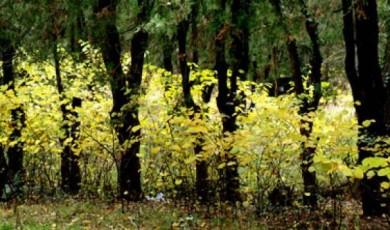 არასამთავრობო ორგანიზაციების მიმართვა დიღმის ტყე-პარკში დაგეგმილ მშენებლობასთან დაკავშირებით