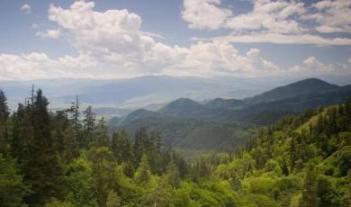 საქართველოს მართლმადიდებელი ეკლესიისთვის ტყის რესურსების გადაცემის შესახებ